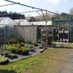 Tuincentrum Disveld (3)