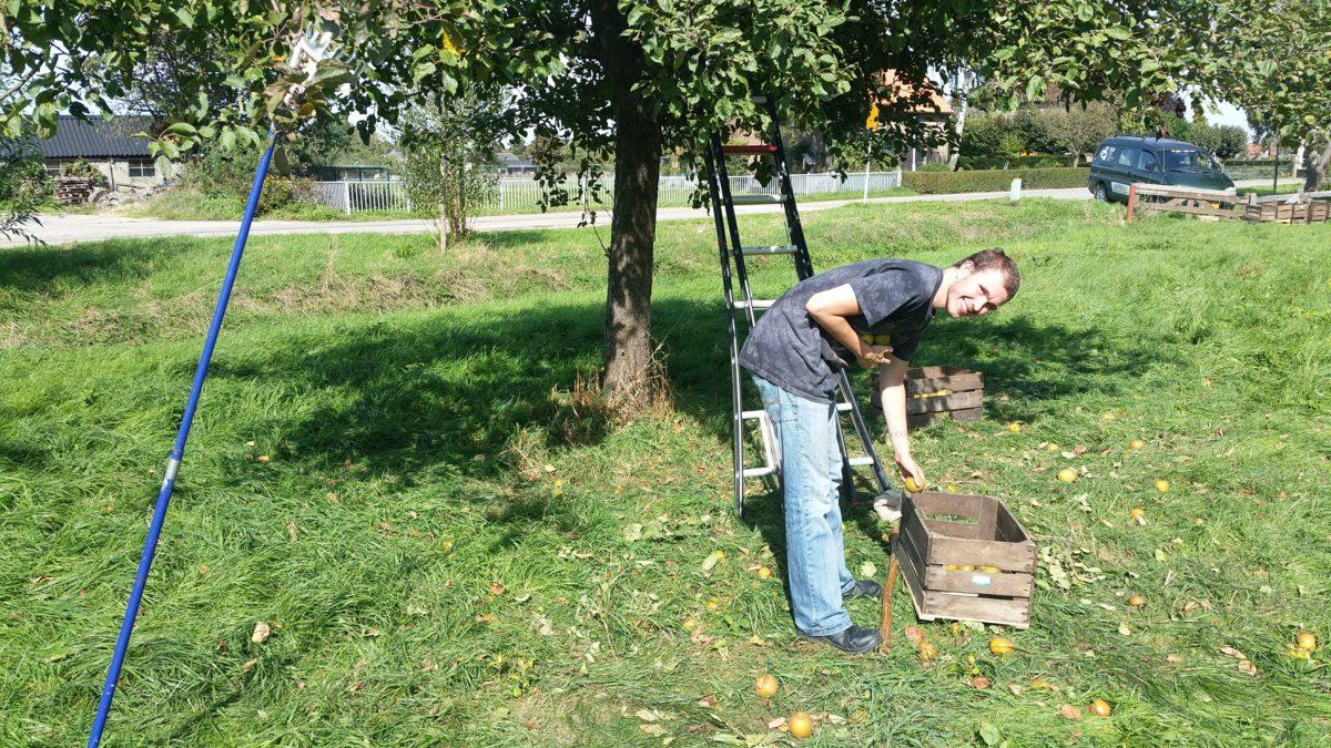 (VIDEO) Appels plukken in Beuningen