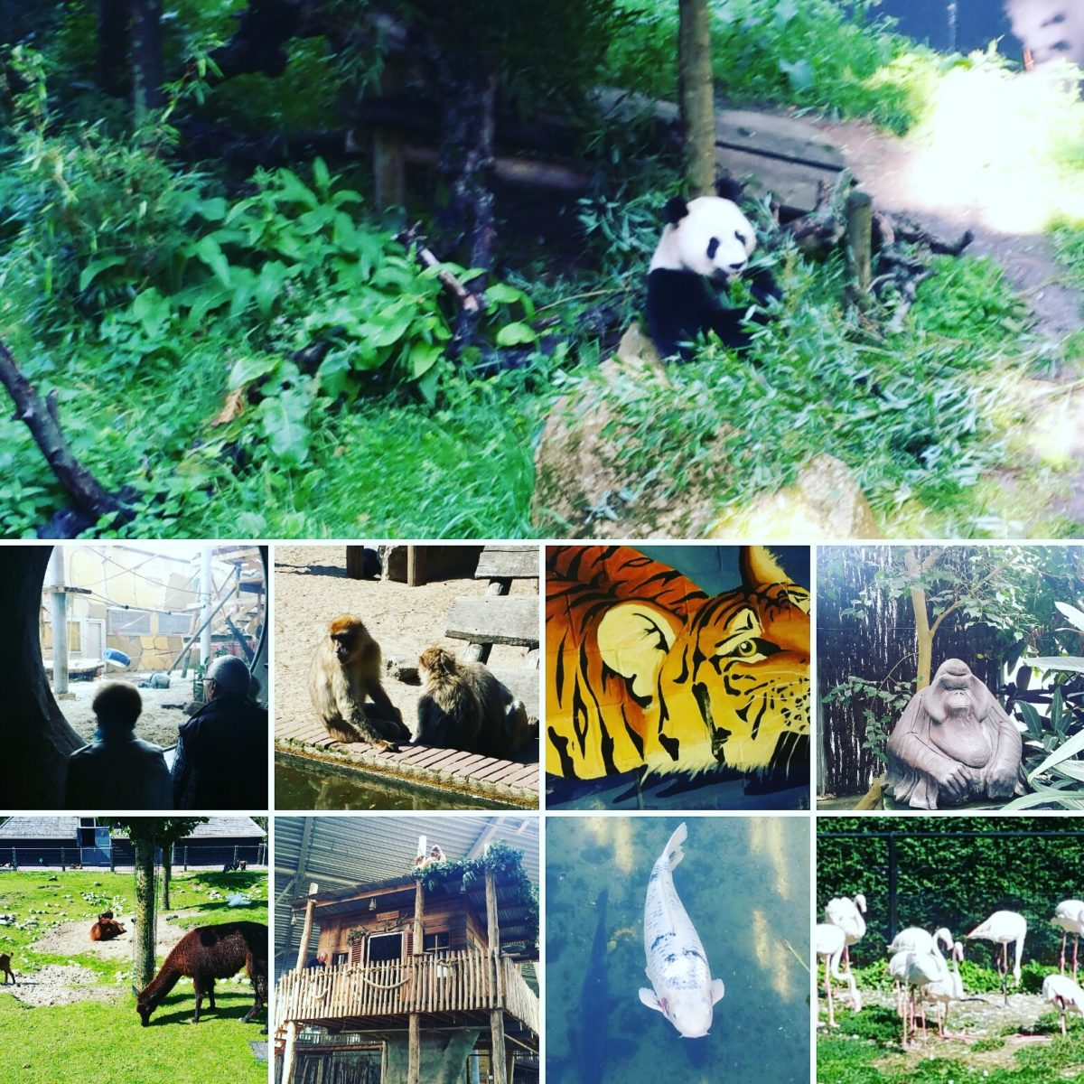 (VIDEO) Bezoekje aan Ouwehands Dierenpark in Rhenen